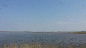 Vogelexcursie Lauwersmeer Brandganzen Ezumakeeg Noord
