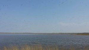 Birdwatching excursion Lauwersmeer Barnacle geese Ezumakeeg Noord