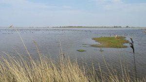 Birding excursion Lauwersmeer Ezumakeeg Zuid