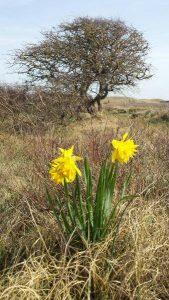 Voorjaar op Texel