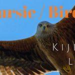 Expériences d'observation des oiseaux