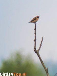 Vogelexcursie Fochteloërveen Paapje