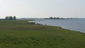 Vogelexcursie Lauwersmeer De Pomp