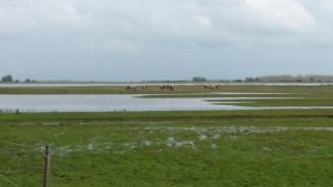 Birdwatching excursion Lauwersmeer Koniks horses Ezumakeeg south