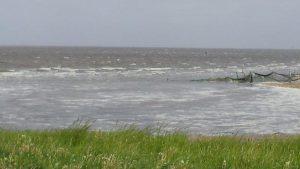 Birding excursion Lauwersmeer foam heads on the Wadden Sea