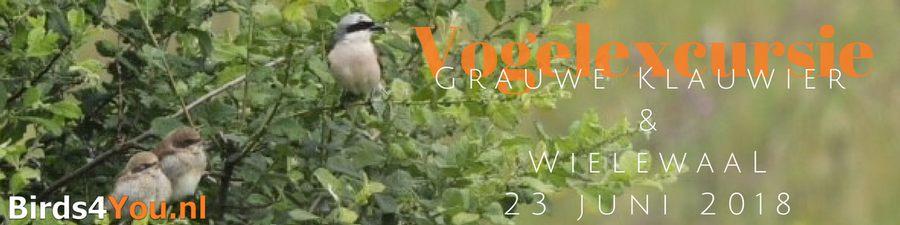 Grauwe klauwier & wielewaal excursie 2018