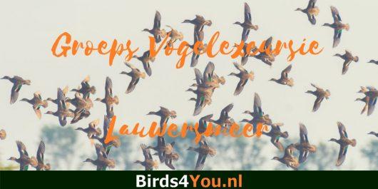 Groeps vogelexcursie Lauwersmeer
