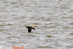 Vogelexcursie Casarca Jaap Deensgat