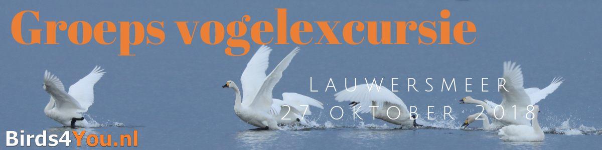 Groeps vogelexcursie Lauwersmeer 2018