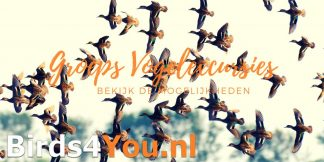 Groeps vogelexcursies