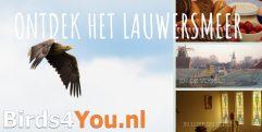 Vogelexcursie arrangement Lauwersmeer