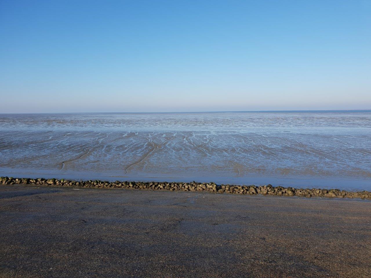 Vogelexcursie verslag Lauwersmeer 17-11-2018