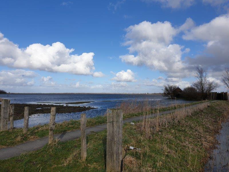 Verslag Privé Vogelexcursie Lauwersmeer 17 maart 2019