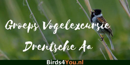 Groeps vogelexcursie Drentsche Aa