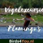 Flamingo's & Nachtegalen vogelexcursie Duitsland 1 juni 2019