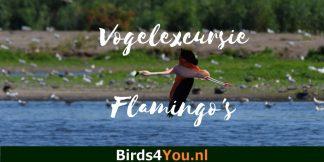 Vogelexcursie Flamingo