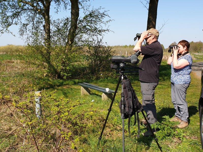 Deelnemers kijken naar de Kraanvogels