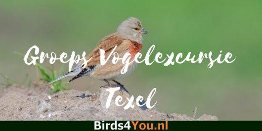Groeps vogelexcursie Texel