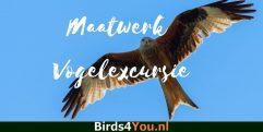 Maatwerk vogelexcursie