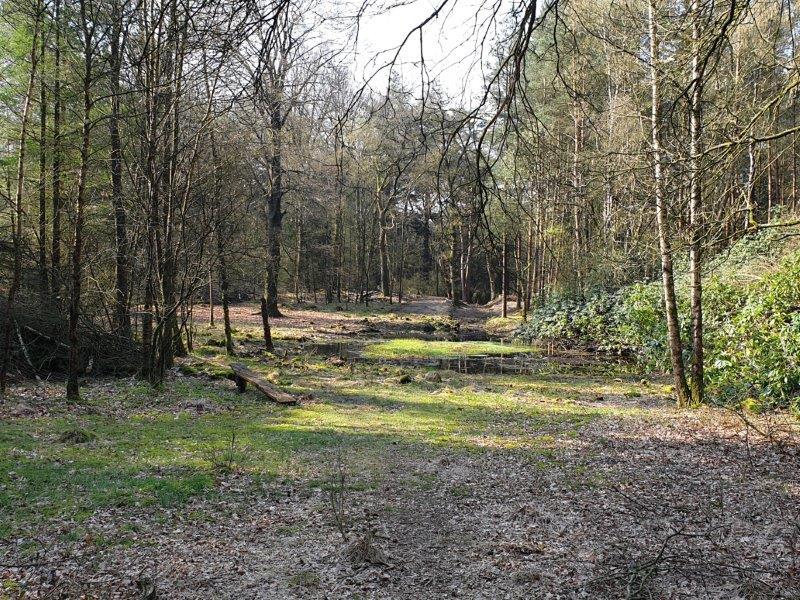 Vogelexcursie Drents-Friese Wold Bosven