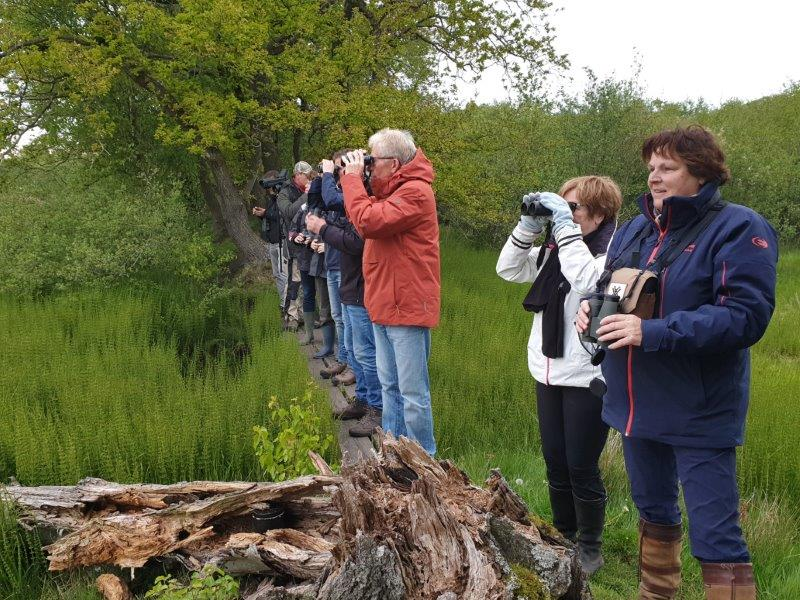 Deelnemers kijkend naar jonge Grauwe Ganzen
