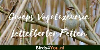 Groeps vogelexcursie Lettelberter Petten 29 juni 2019
