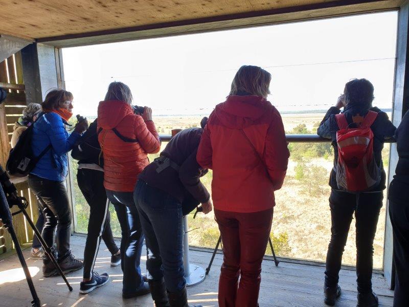 Verslag Privé vogelexcursie Fochteloërveen 11 mei 2019