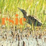 Verslag Privé vogelexcursie Lauwersmeer 15 mei 2019
