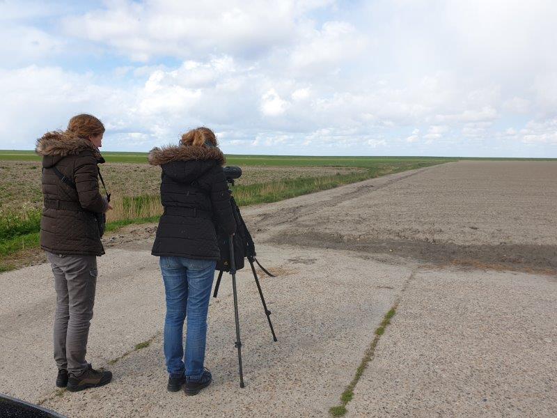 Vogelexcursie Lauwersmeer speuren naar de Morinelplevieren