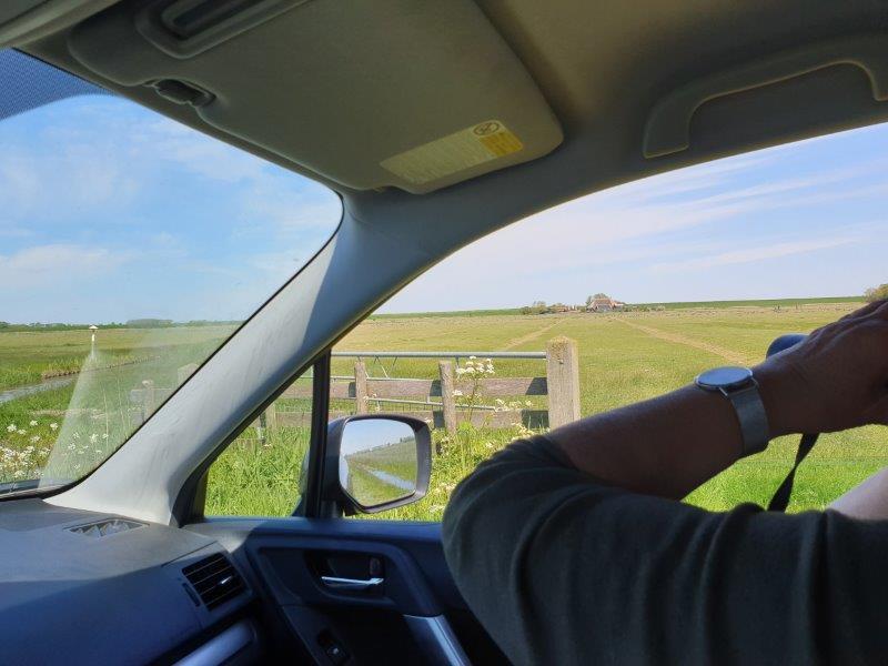 Vogels kijken vanuit de auto