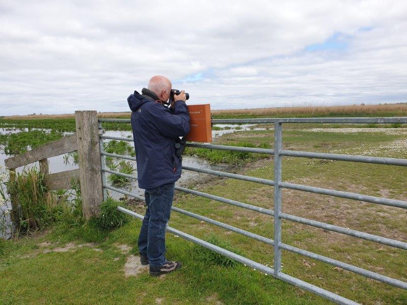 Deelnemer fotografeert de Kleine Plevier