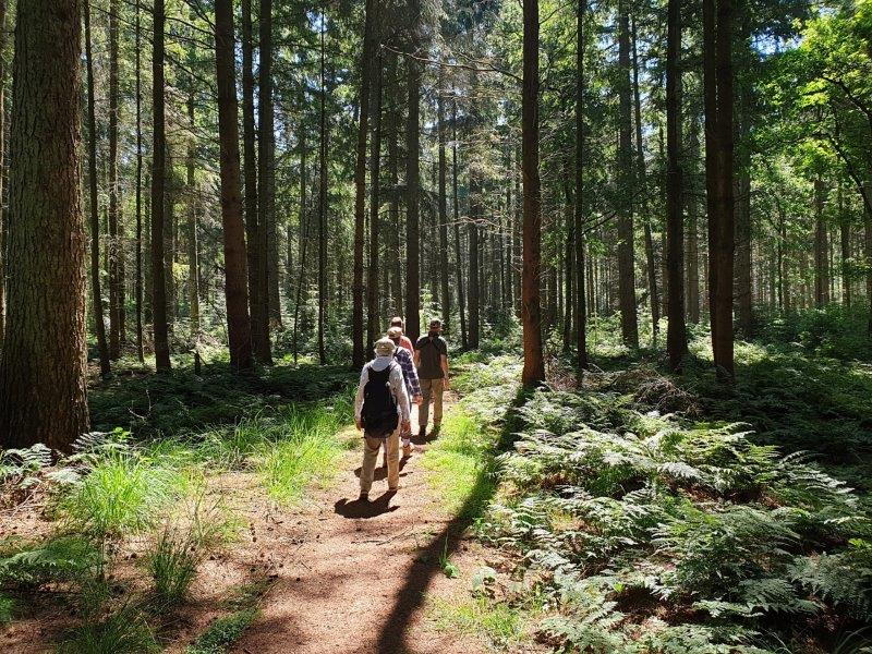 Deelnemers in het bos in Drenthe