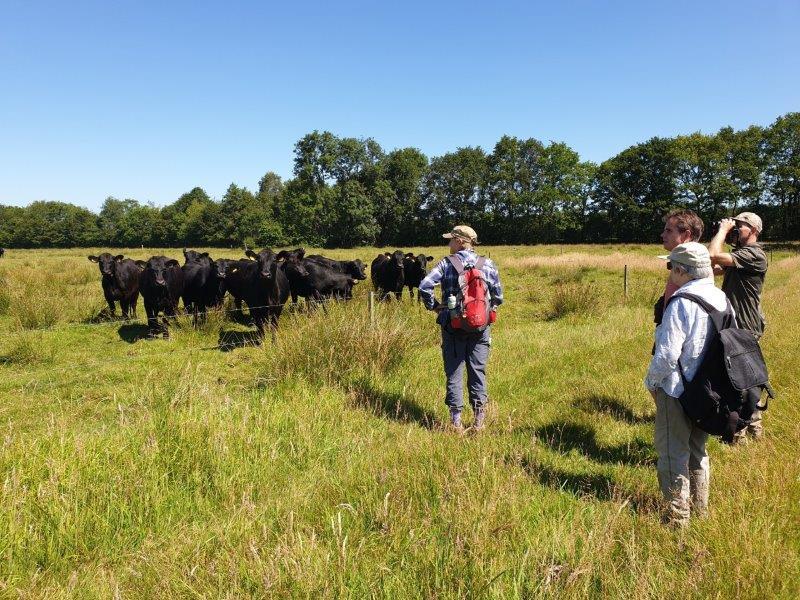Deelnemers kijken naar de runderen