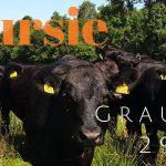 Verslag Groepsexcursie 'Op zoek naar de Grauwe Klauwier' 29 juni 2019