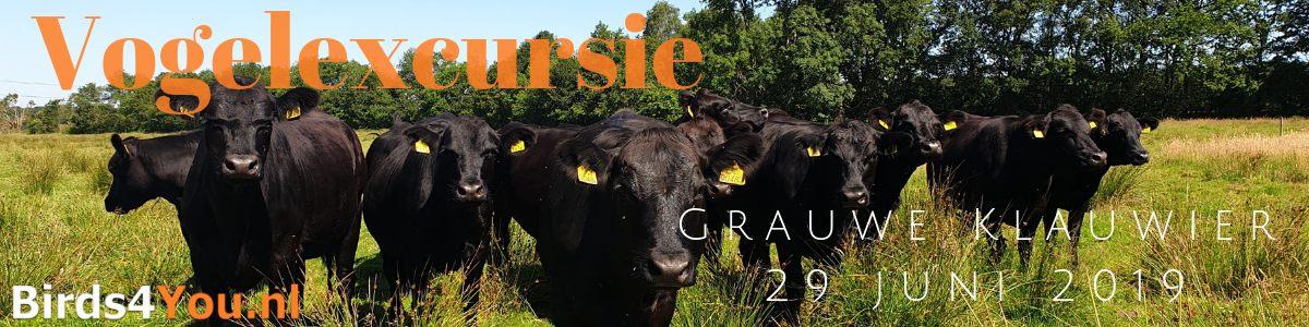 Grauwe Klauwier excursie 2019