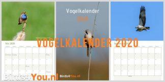Kalender 2020 / Vogelkalender 2020