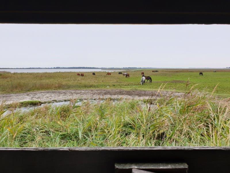 Paarden voor de hut