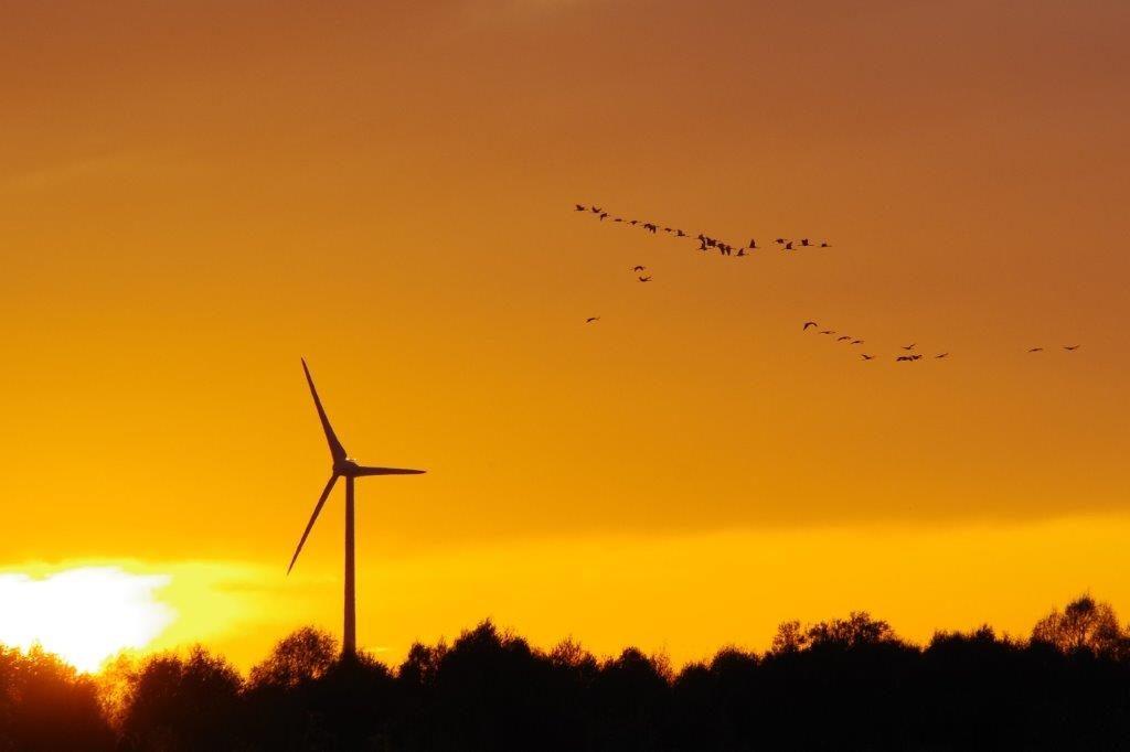 Kraanvogels in de ondergaande zon (foto door Hans)