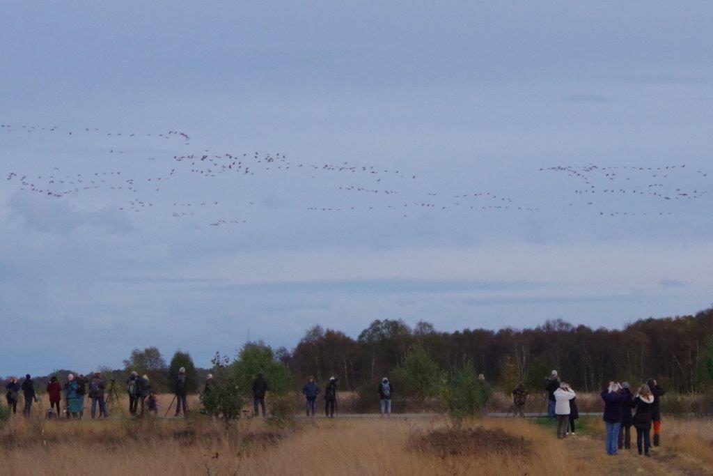 kraanvogels vliegen binnen (foto door Hans)
