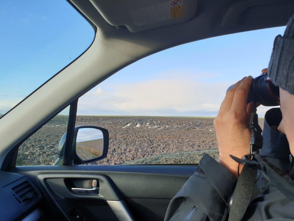 Ganzen kijken vanuit de auto