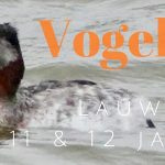 Verslag privé vogelexcursie Lauwersmeer op 11 en 12 januari 2020