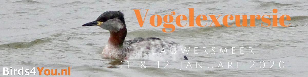 Vogelexcursie Lauwersmeer 11 en 12 januari 2020