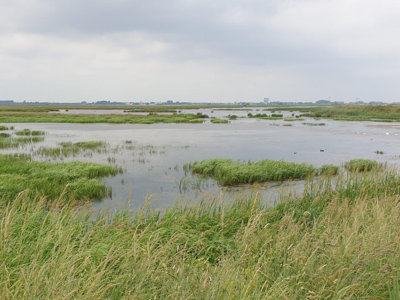 Vogelexcursie Zuidlaardermeer Oostpolder