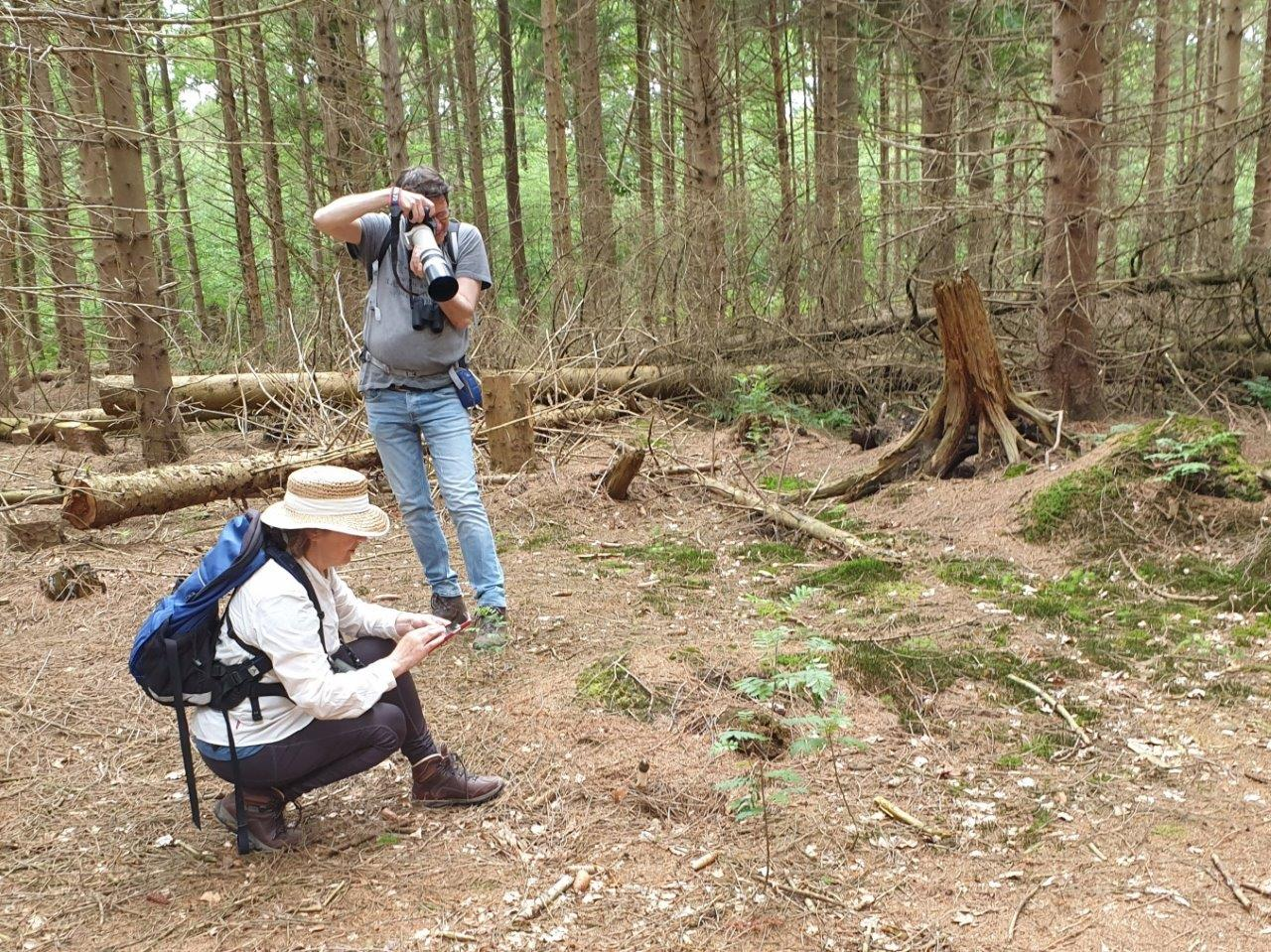 Fotograferen van paddenstoel
