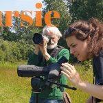 Verslag Privé vogelexcursie Lauwersmeer 27-6-21