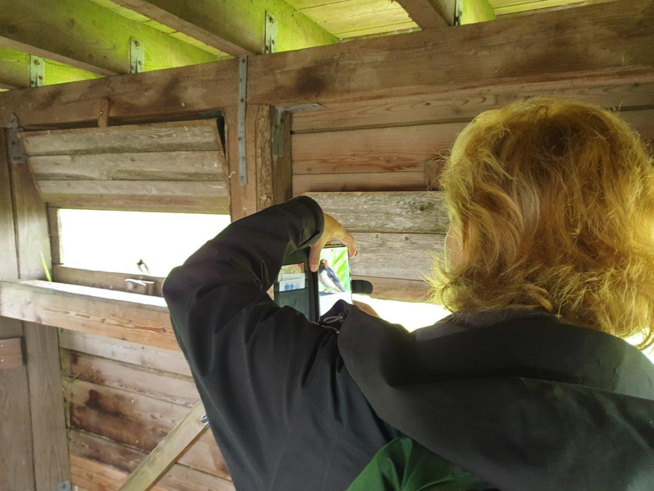Boerenzwaluw fotograferen