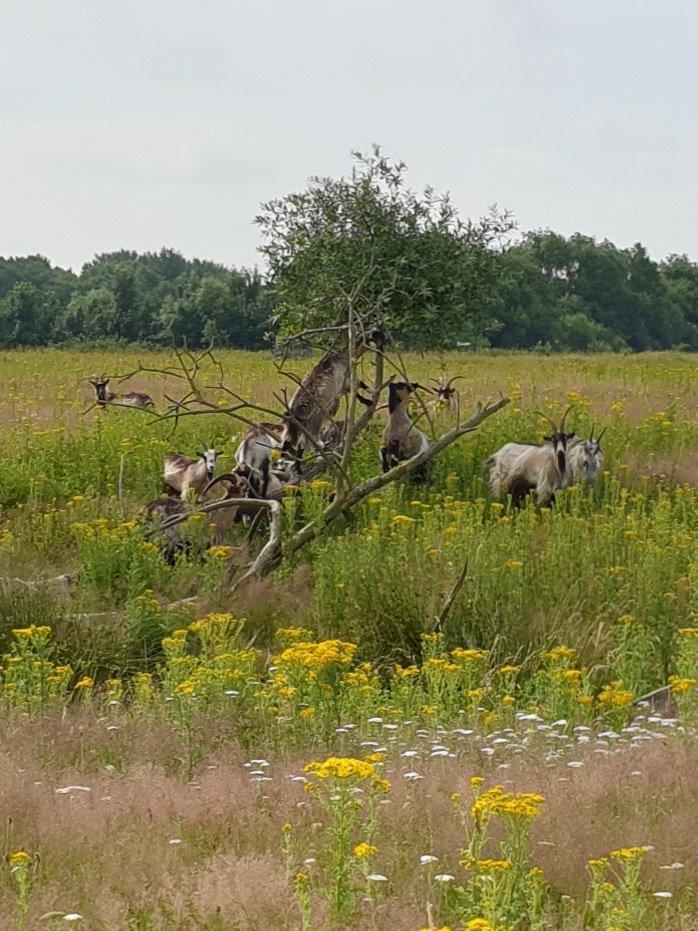 Landgeiten in de boom