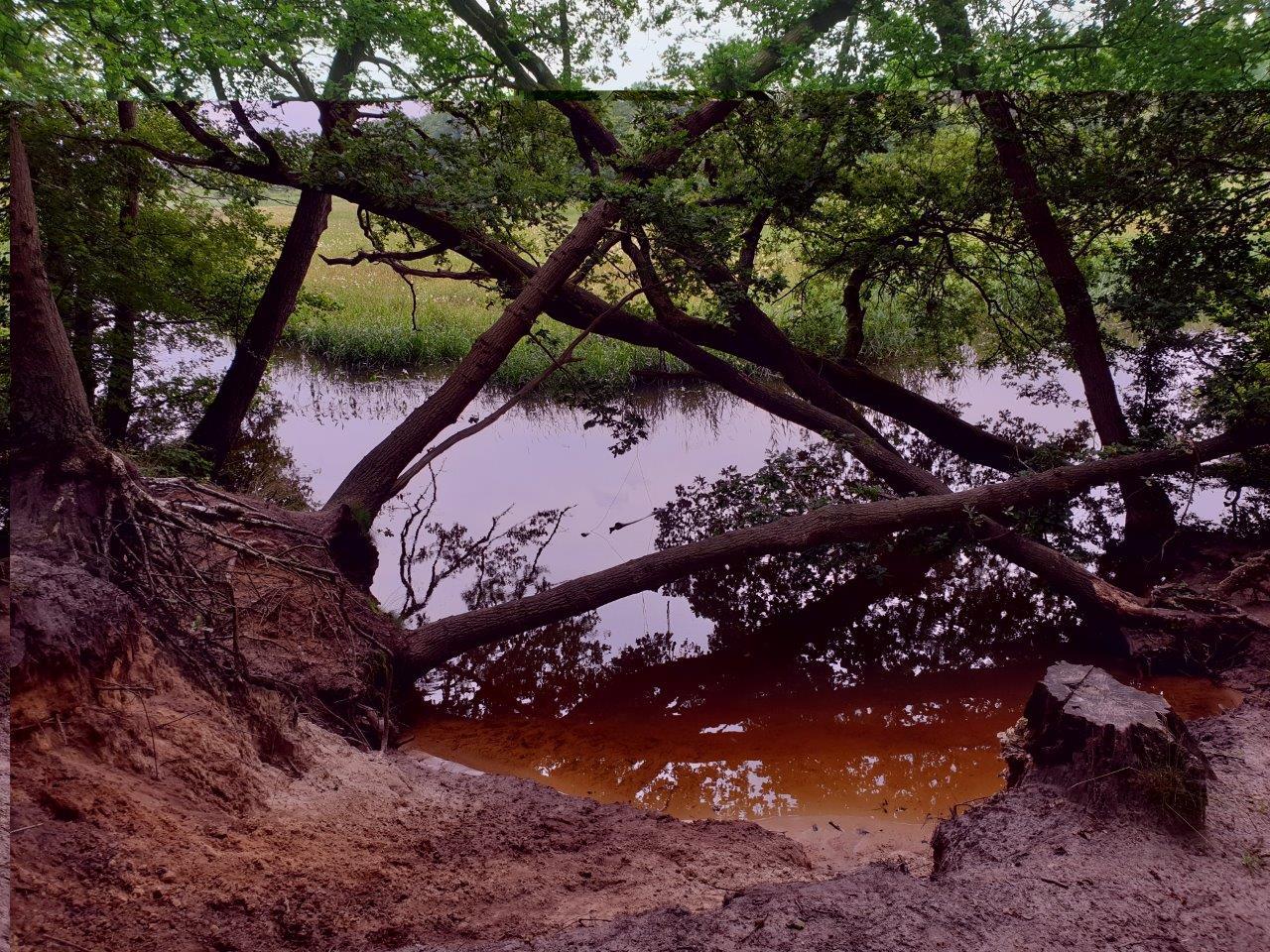 Omgevallen bomen in de bocht