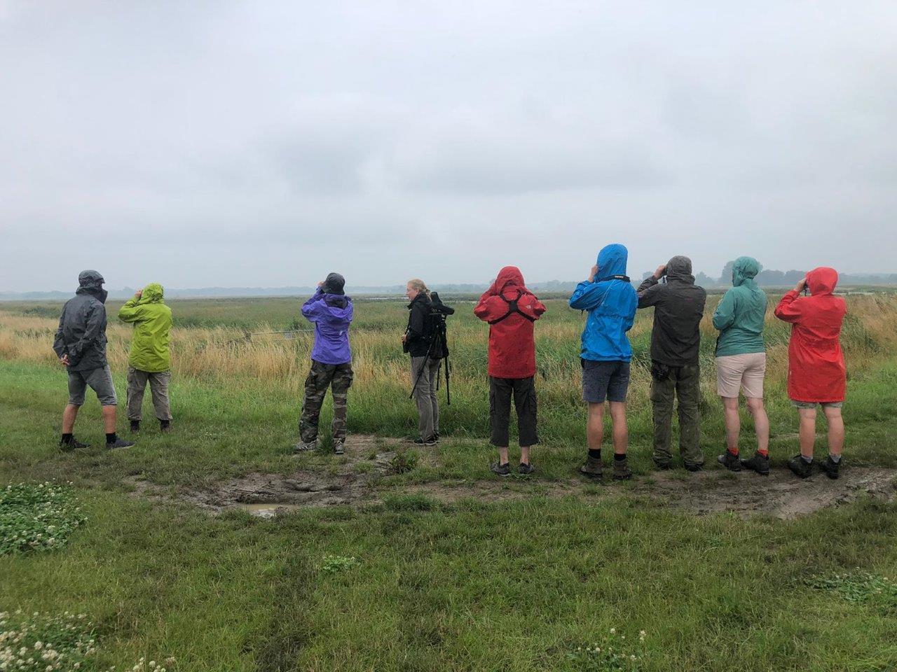 Kijken naar Witwangsterns (foto door deelnemer)