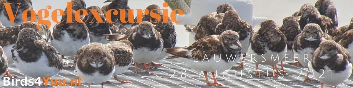 Vogelexcursie Lauwersmeer 28 augustus 2021